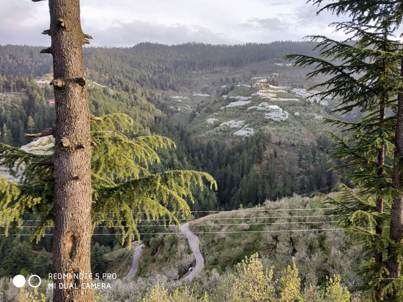 Photo of Summer Hill By aditya chouhan
