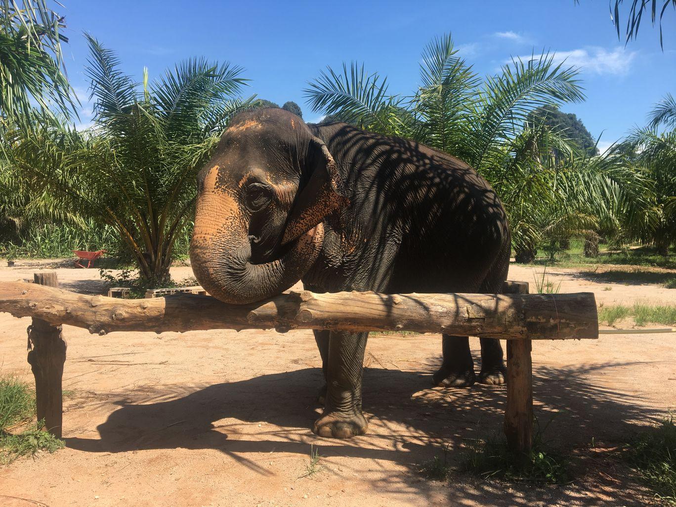 Photo of Krabi Elephant Sanctuary By Vishal Wadhwani