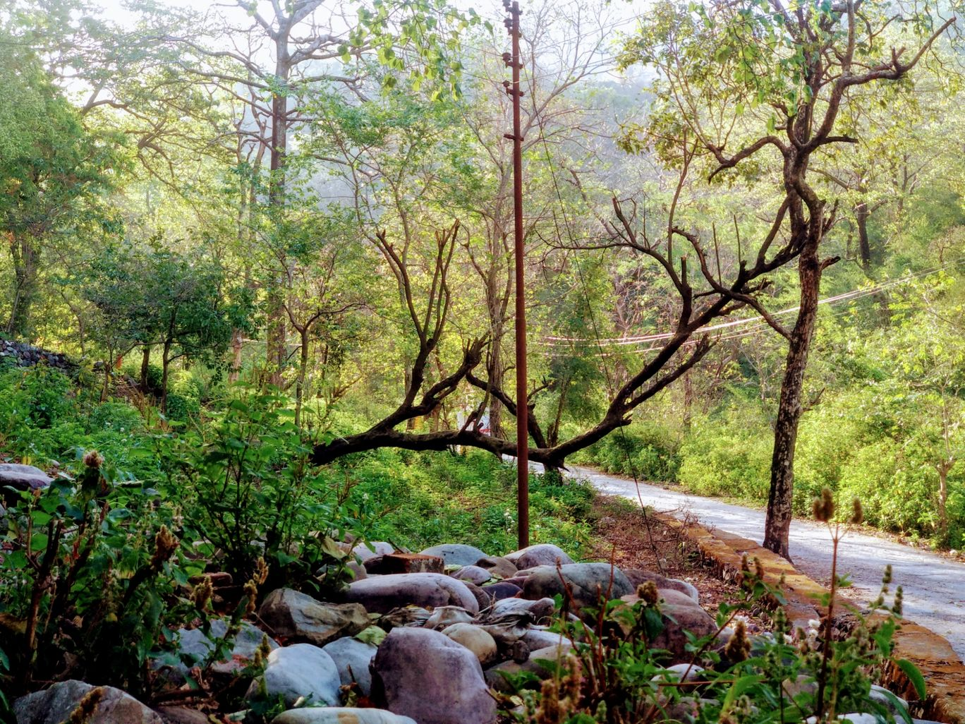 Photo of Rishikesh By Kamini Dave