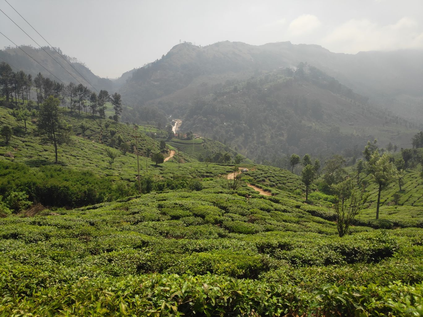 Photo of Munnar By sonia patel