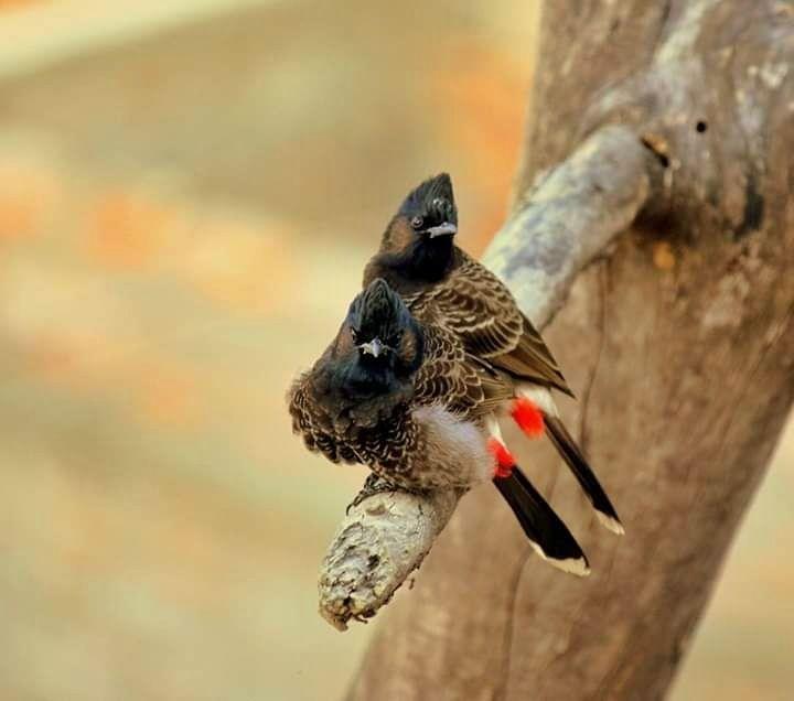 Photo of Jalpaiguri By Madhura Banerjee