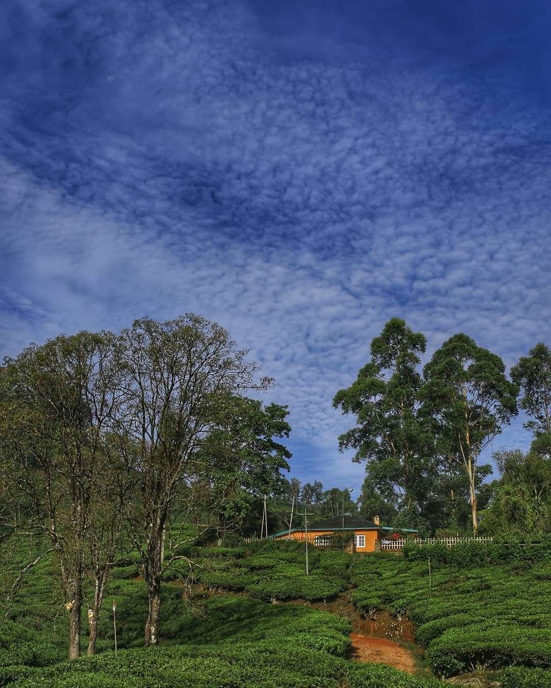 Photo of Munnar Hill Station By Ankita Thakur