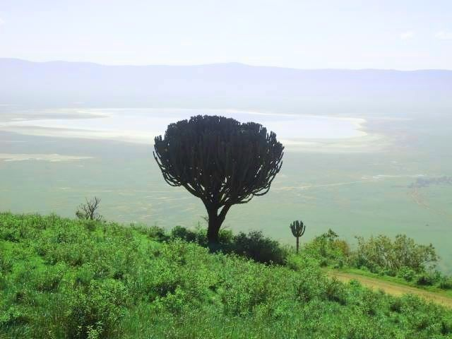 Photo of Ngorongoro Crater By Sweta Chakraborty