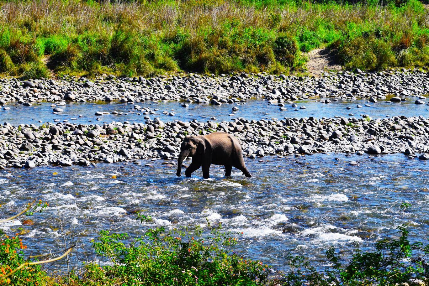 Photo of Jim Corbett National Park By SOUMYA SURAVI