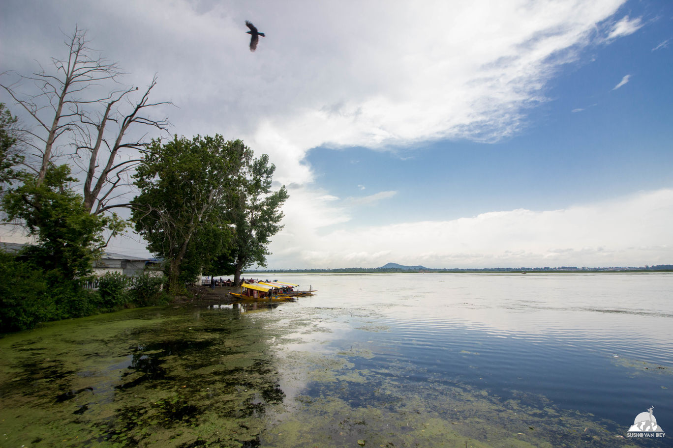 Photo of Dal Lake By JourneyJournals