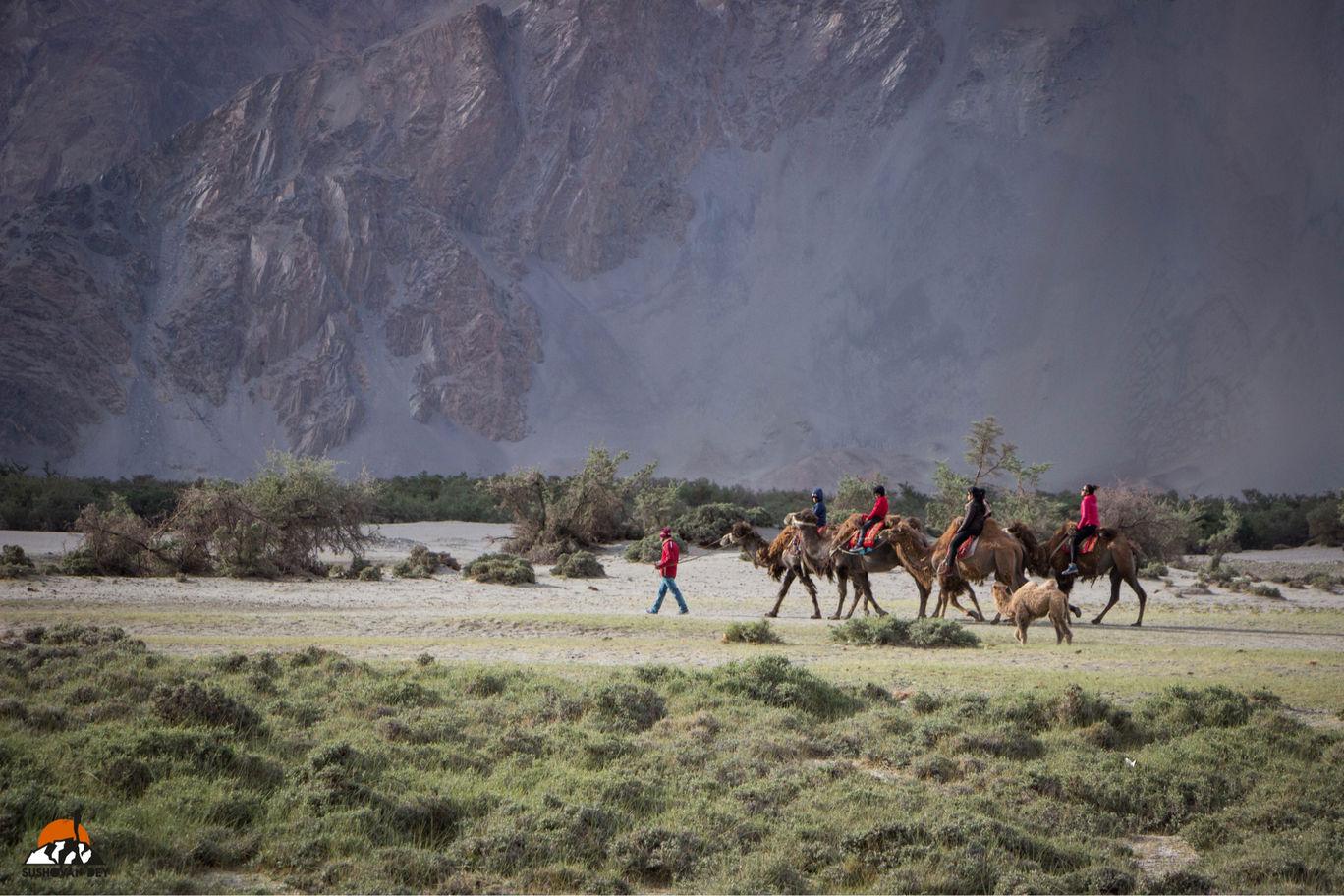 Photo of Photo Journal of Leh, Ladakh! By JourneyJournals