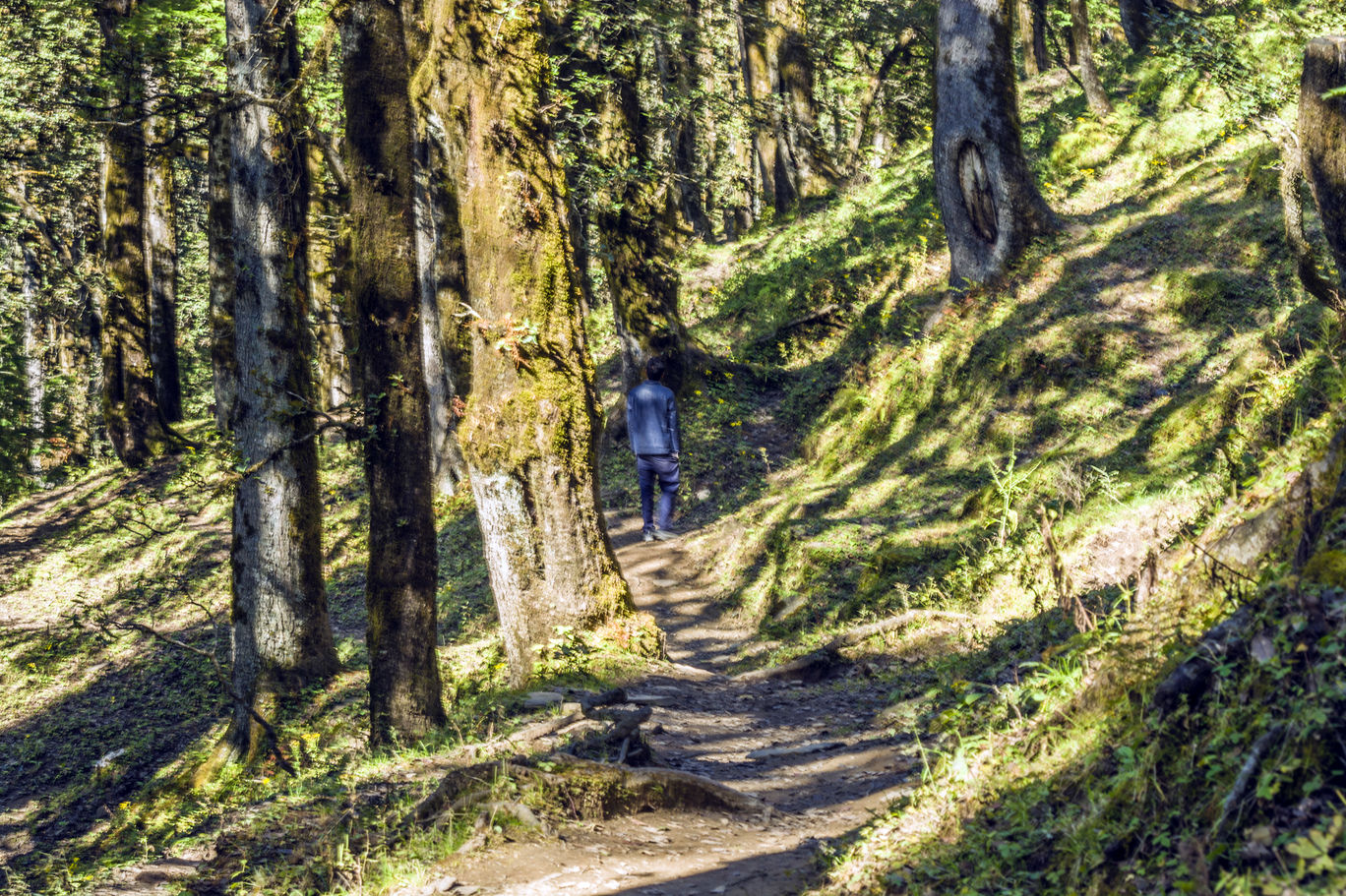 Photo of Jalori Pass By Sushovan Sar