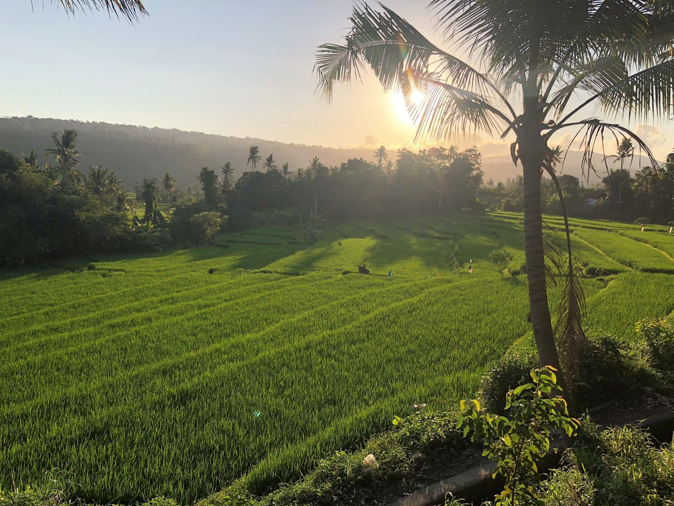 Photo of Tegalalang Rice Terrace By Gunjan Sharma