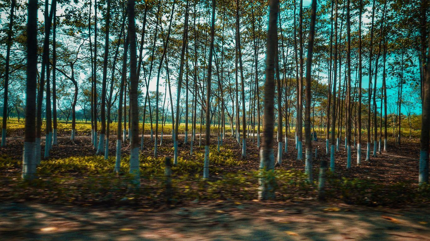Photo of Assam By anurag hazarika