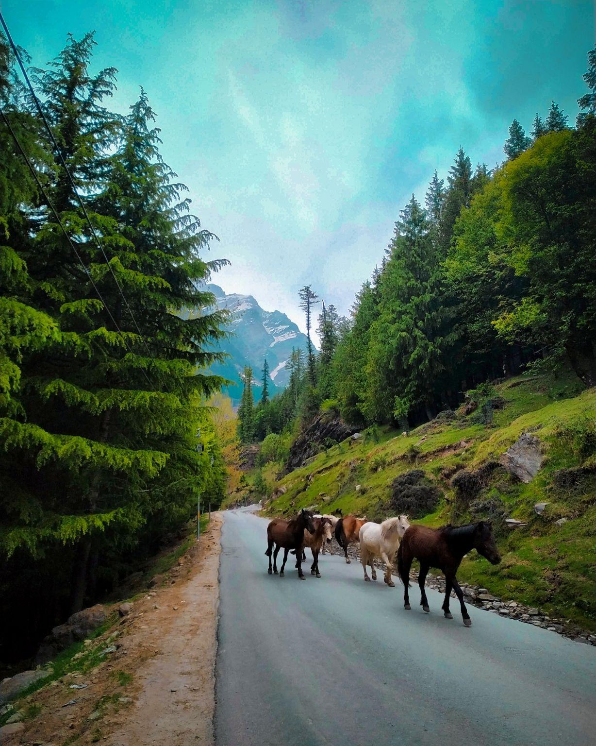 Photo of Rohtang Pass By Munmi Pathak