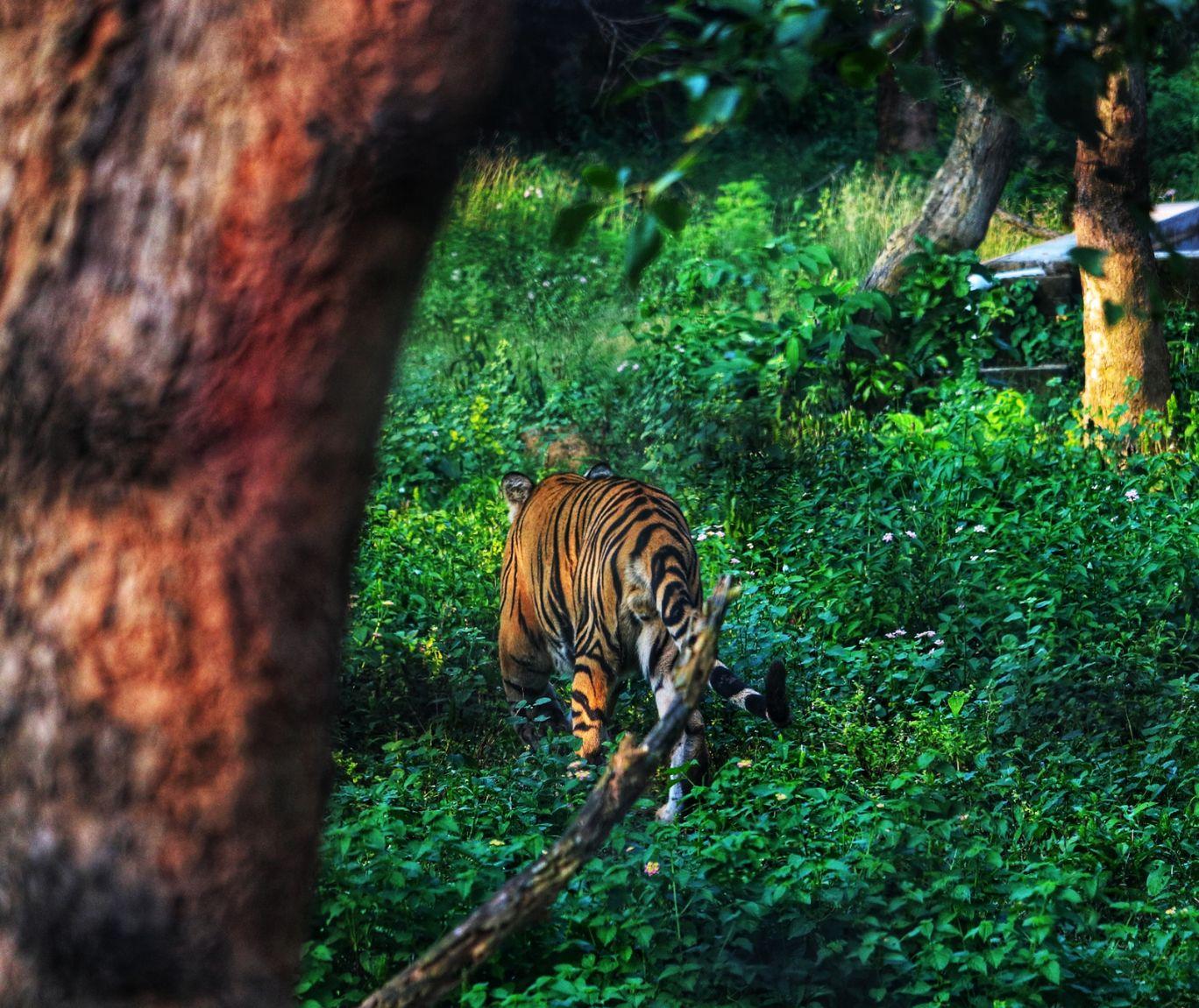 Photo of Nandankanan Zoological Park By Sangita Basu Dey