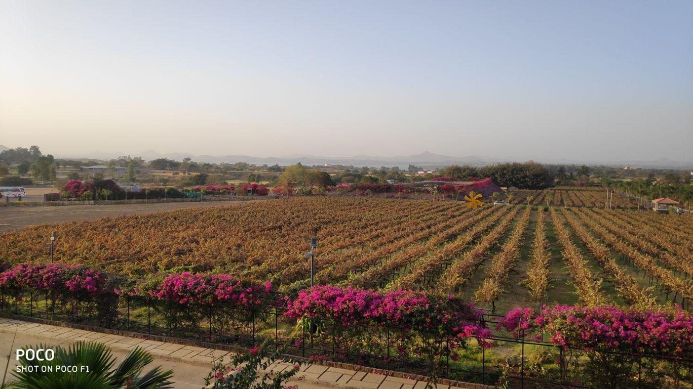 Photo of Sula Vineyards By riddhi vaidya
