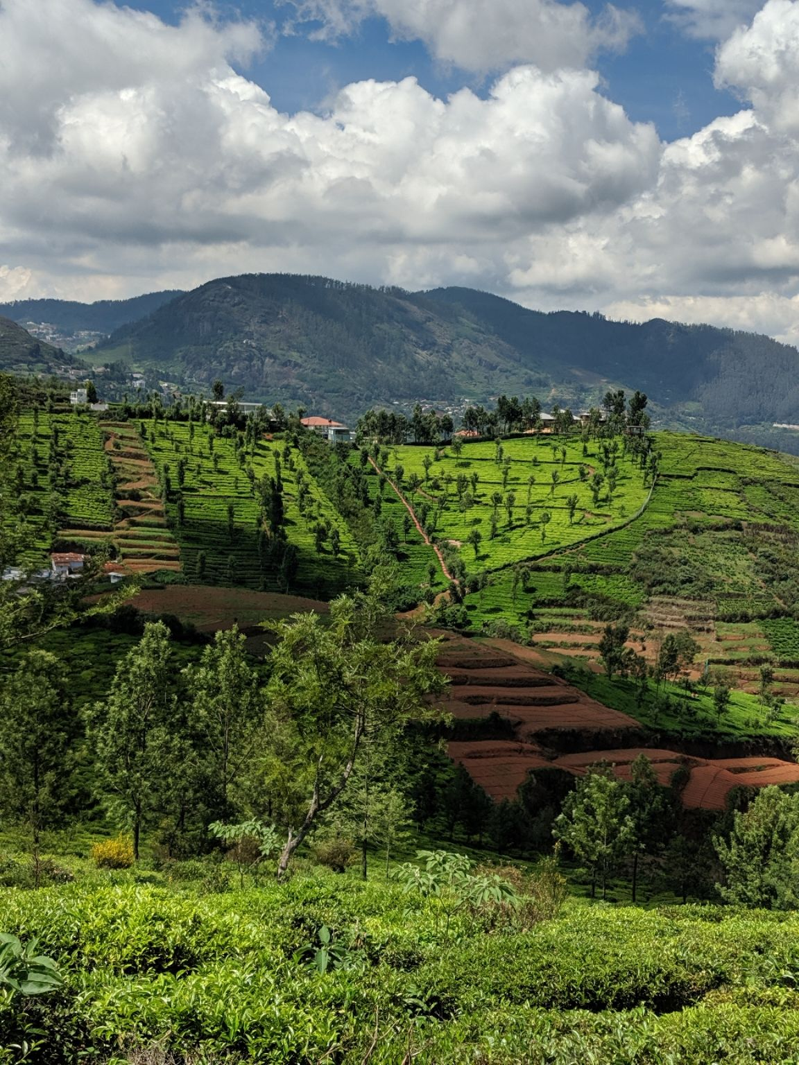 Photo of Ooty By Mukul Mudgal