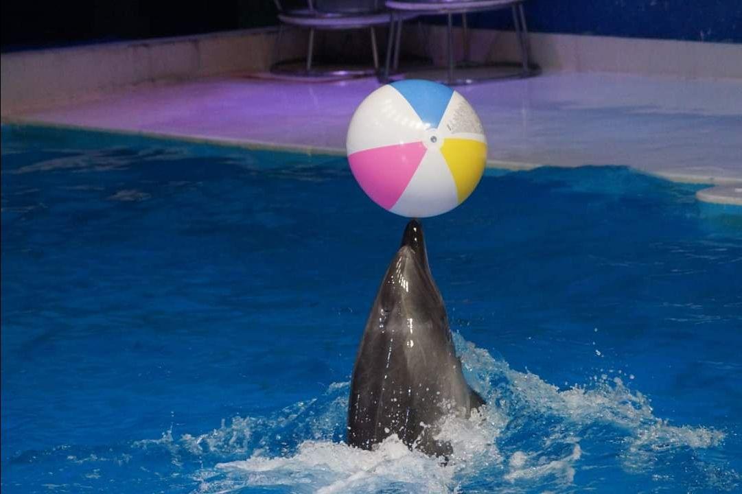 Photo of Dubai Dolphinarium - Dubai - United Arab Emirates By Pooja Lahoti Bhalika