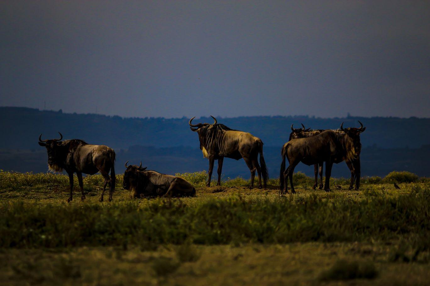 Photo of Masai Mara National Reserve By Kaushak Maheshwary