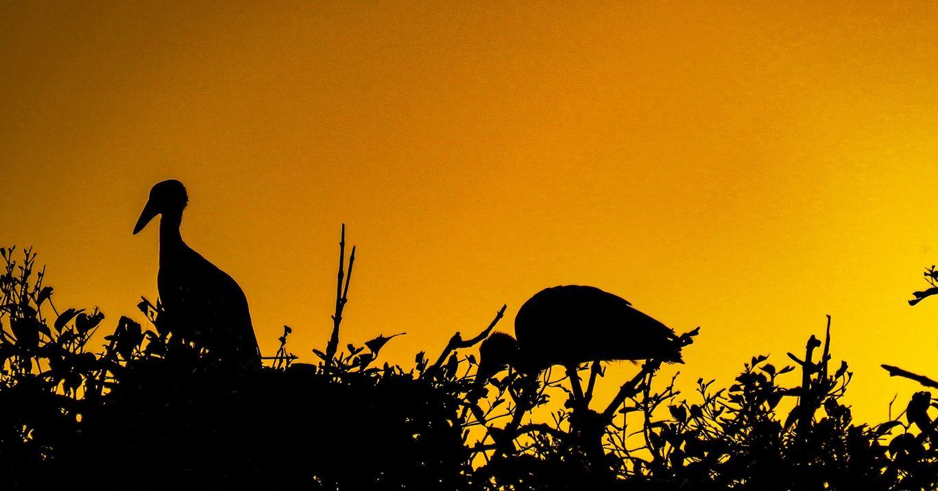 Photo of Bhitarkanika National Park By Kaushak Maheshwary