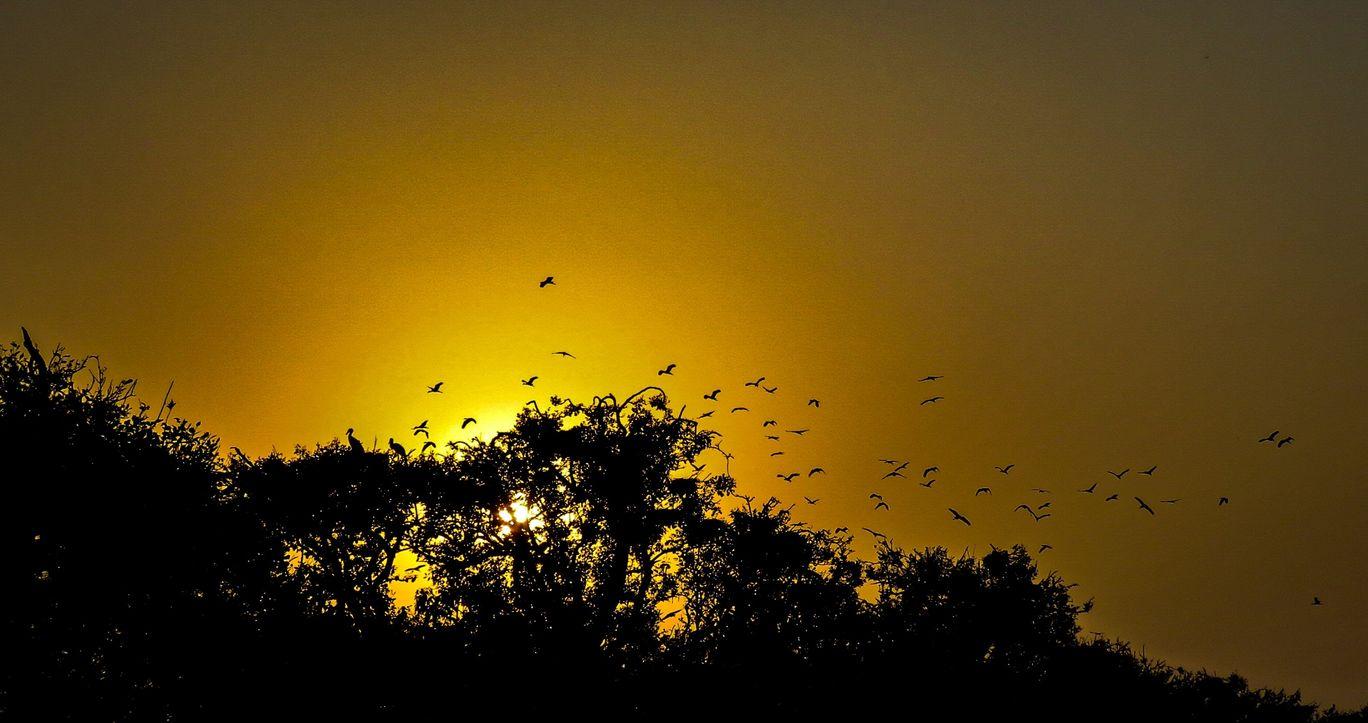 Photo of Orissa By Kaushak Maheshwary