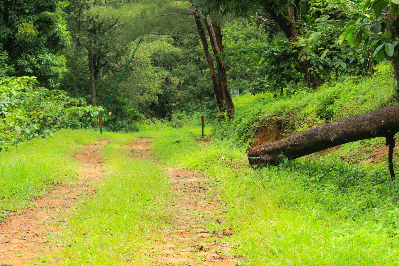 Photo of Pakuthi Palam KFDC forest lodge By Sabari Varkala