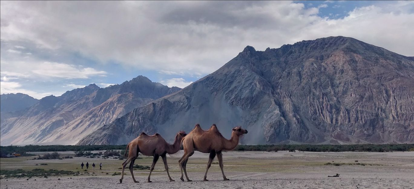 Photo of Nubra Valley By Piyush Khatter
