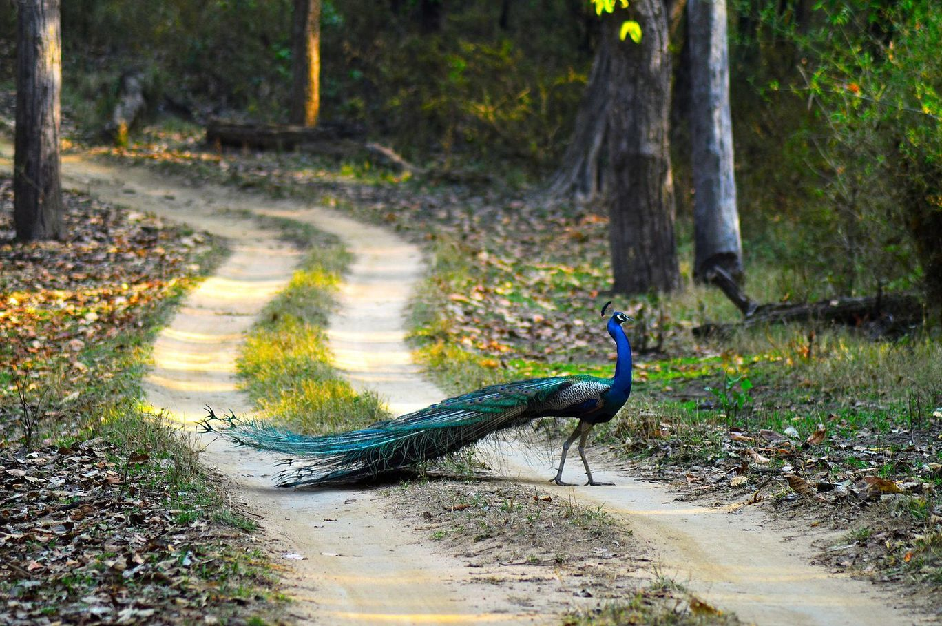 Orchha Wildlife Sanctuary, Orachha, India: View Images, Timing and ...