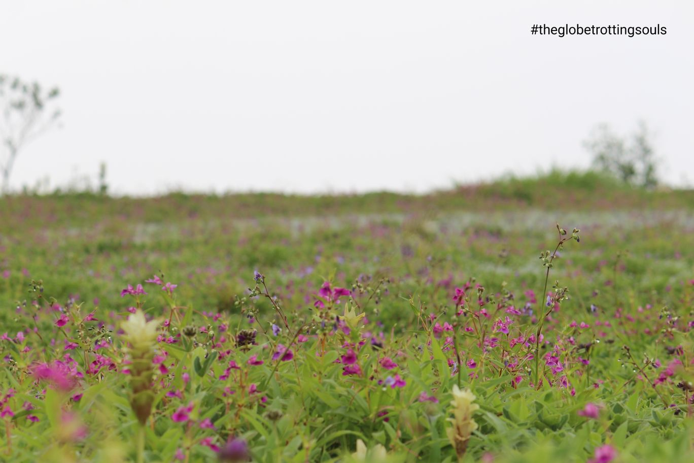 Photo of Kaas Plateau of Flowers By The Globetrotting Souls
