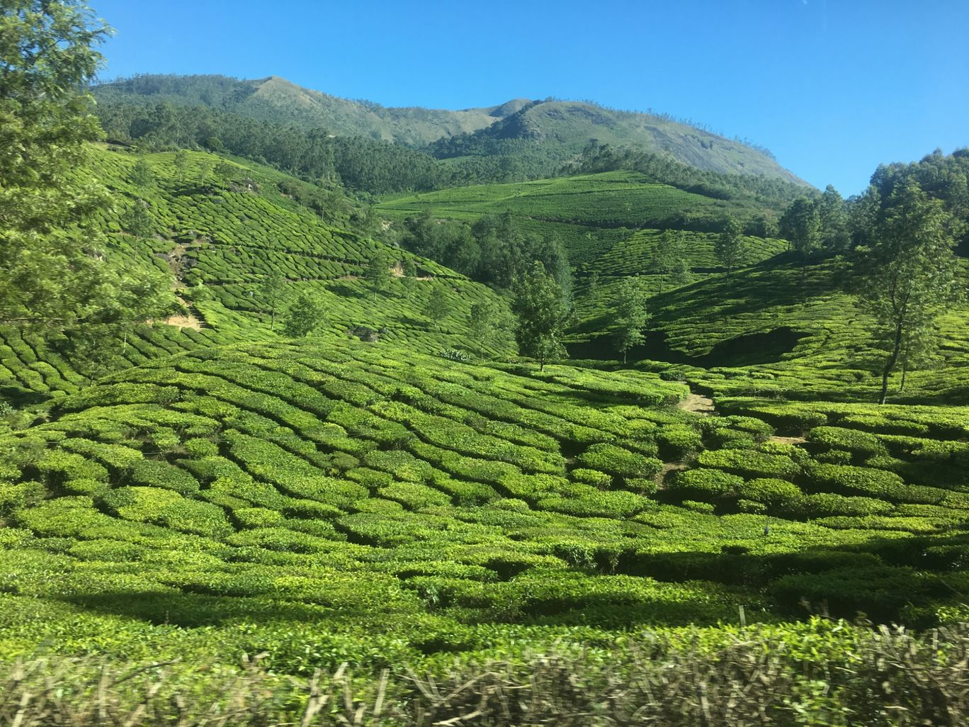 Photo of Munnar By Saad Kazi
