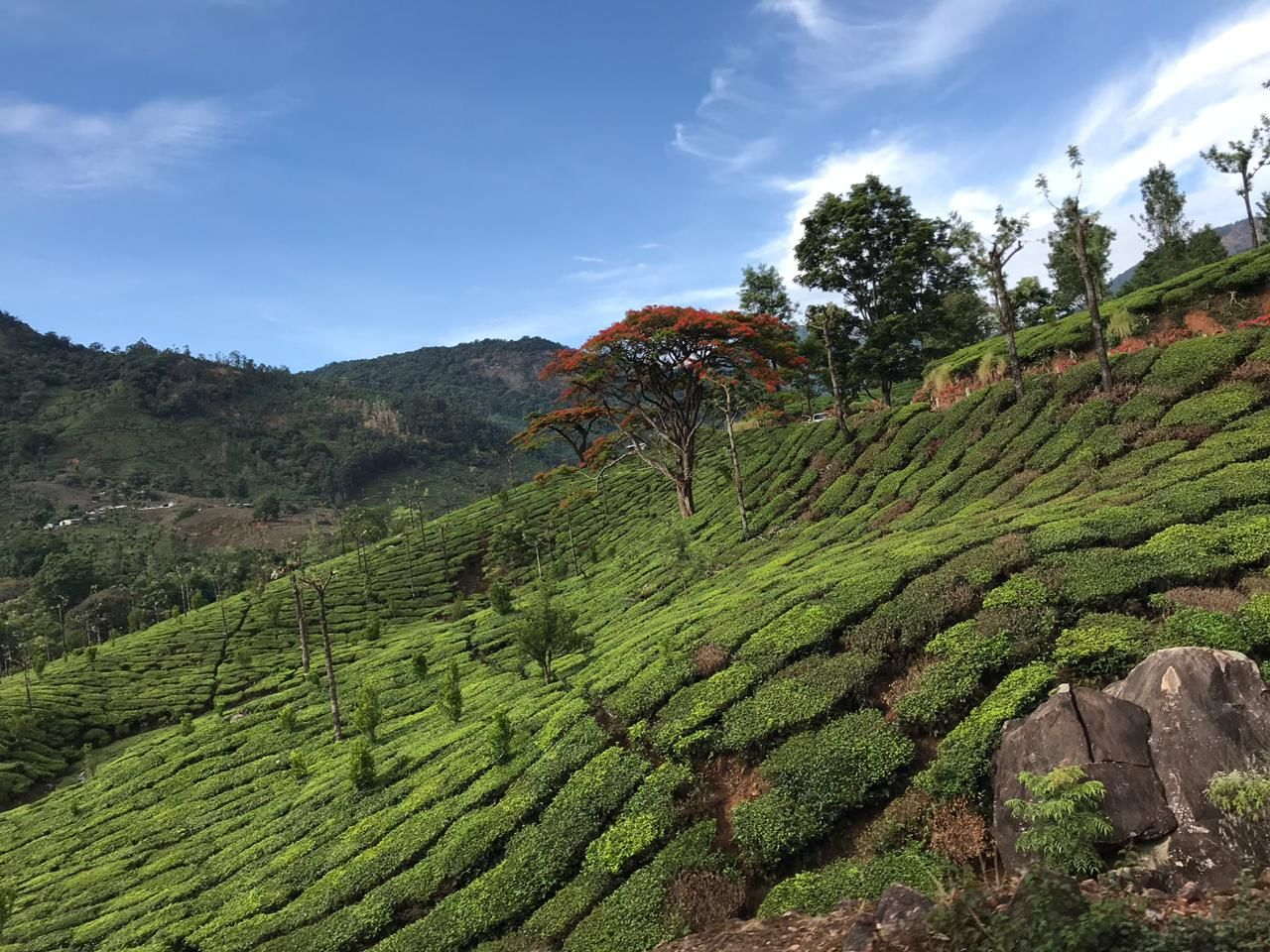 Photo of Munnar Hill Station By Nandini Mahadev