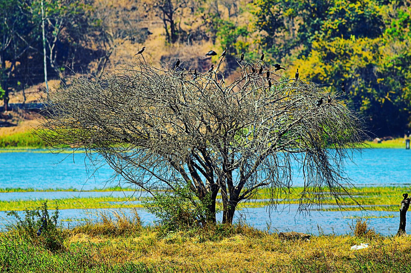 Photo of Panshet Dam By Vinit
