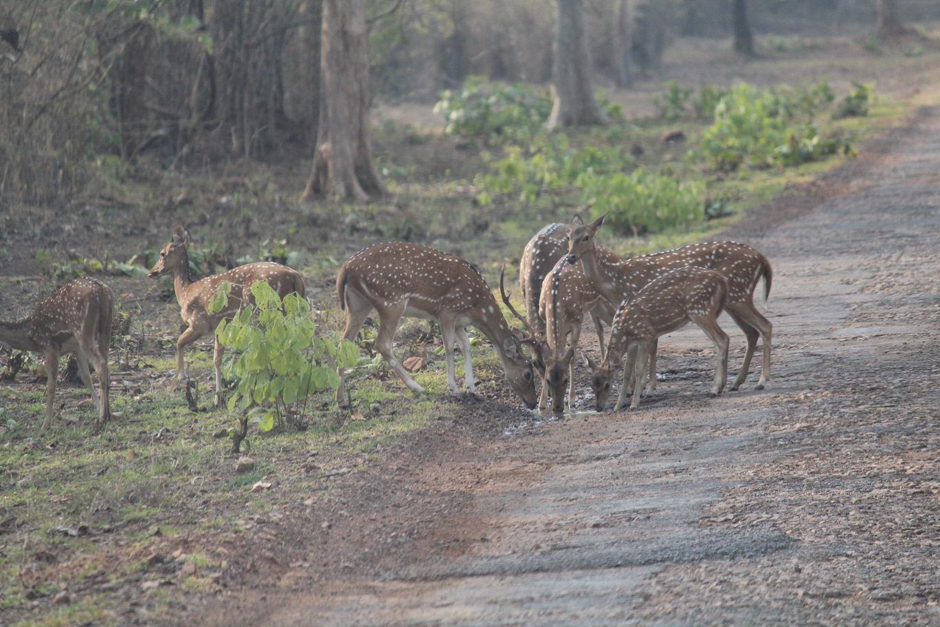 Photo of Tadoba National Park By Shekhar Nanda Umakant