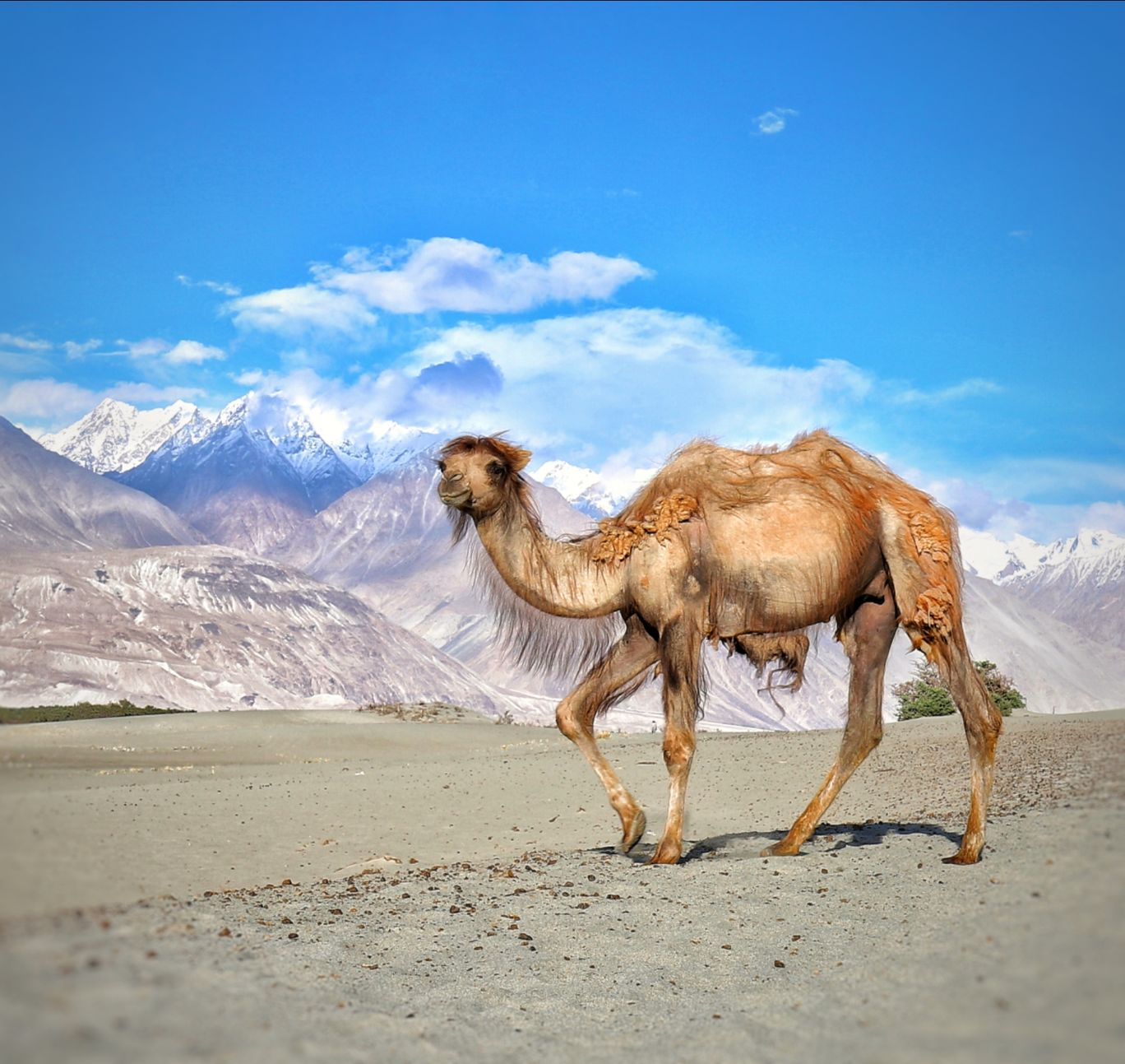 Photo of Nubra Valley By Rajiv Kapoor