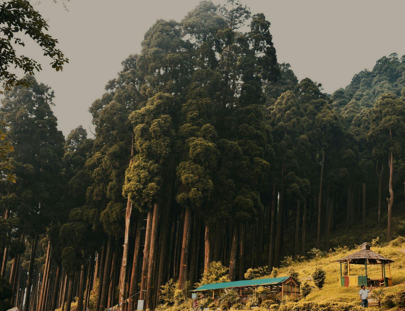 Photo of Darjeeling By Manisha Mandal