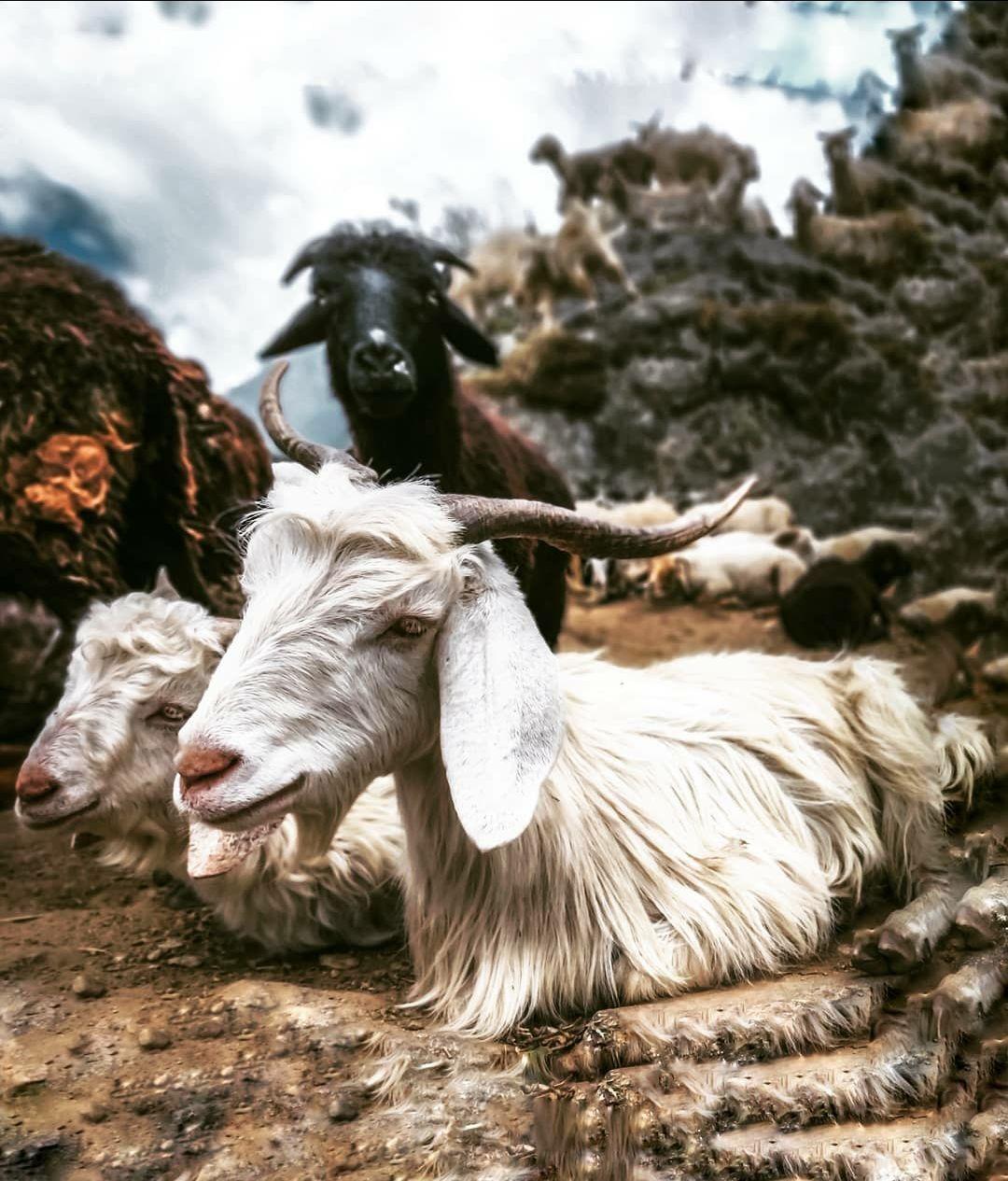 Photo of Uttarakhand By Prateek Tirthani