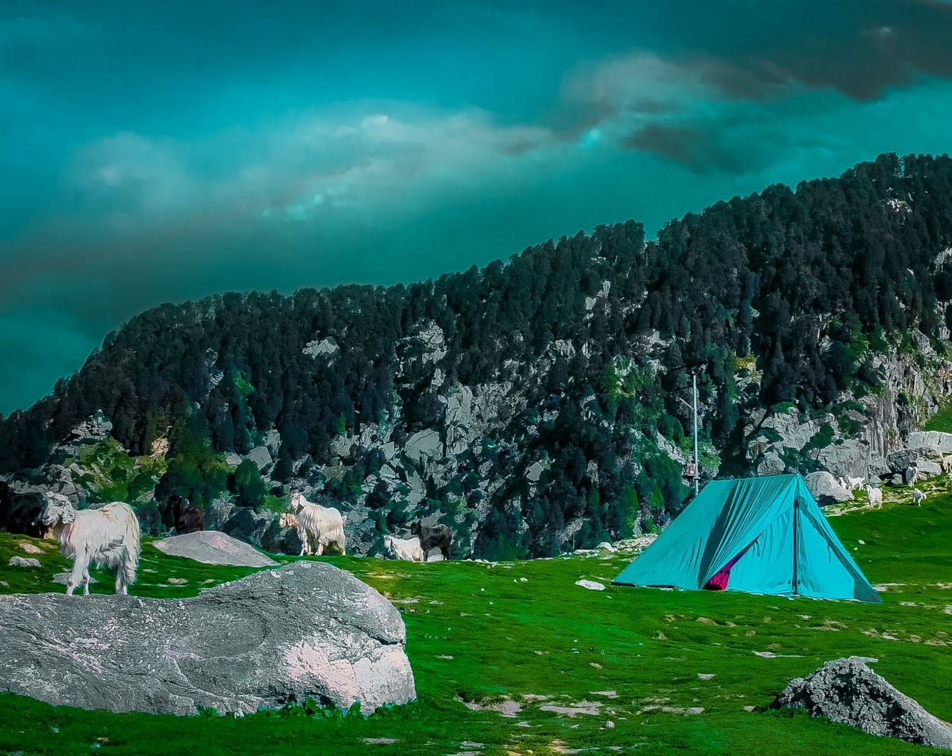 Photo of Triund By Sudhir Kumar