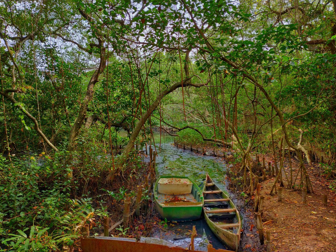 Photo of Kochi By Vinay Datta