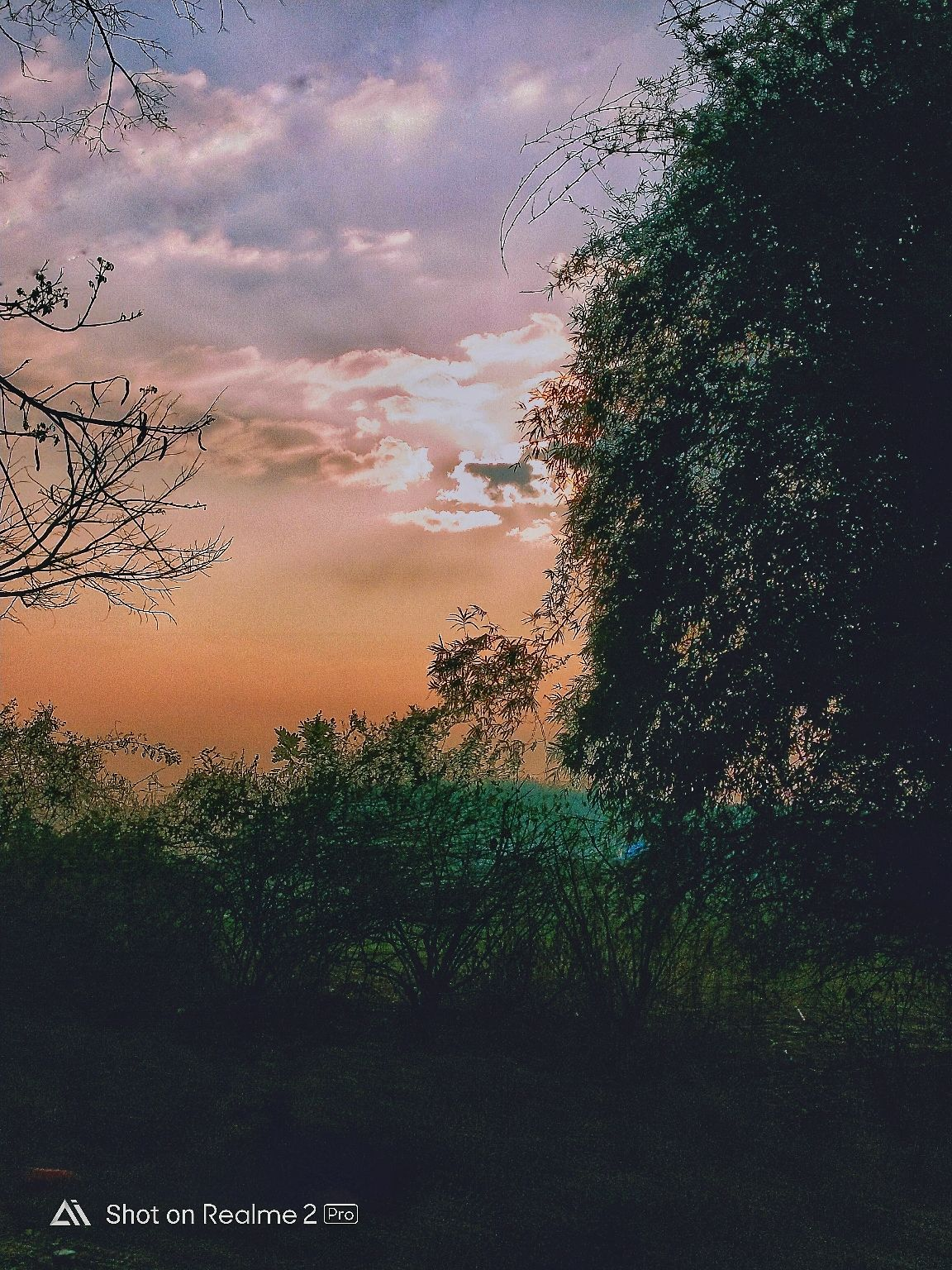 Photo of Kodagu By Divyanshu Karan