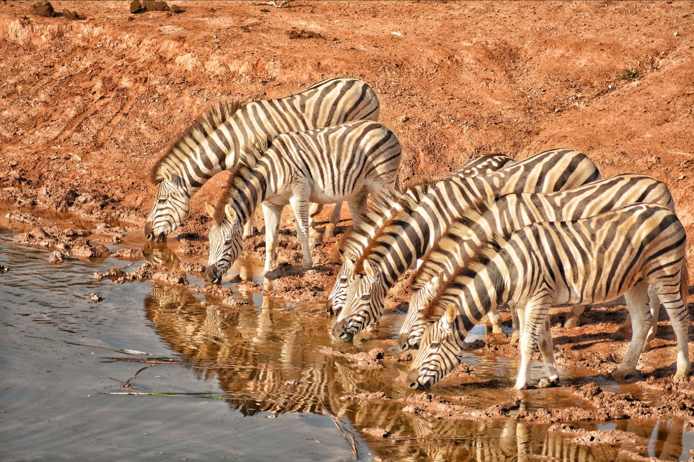 Photo of Addo Elephant National Park By Mayan Rakesh