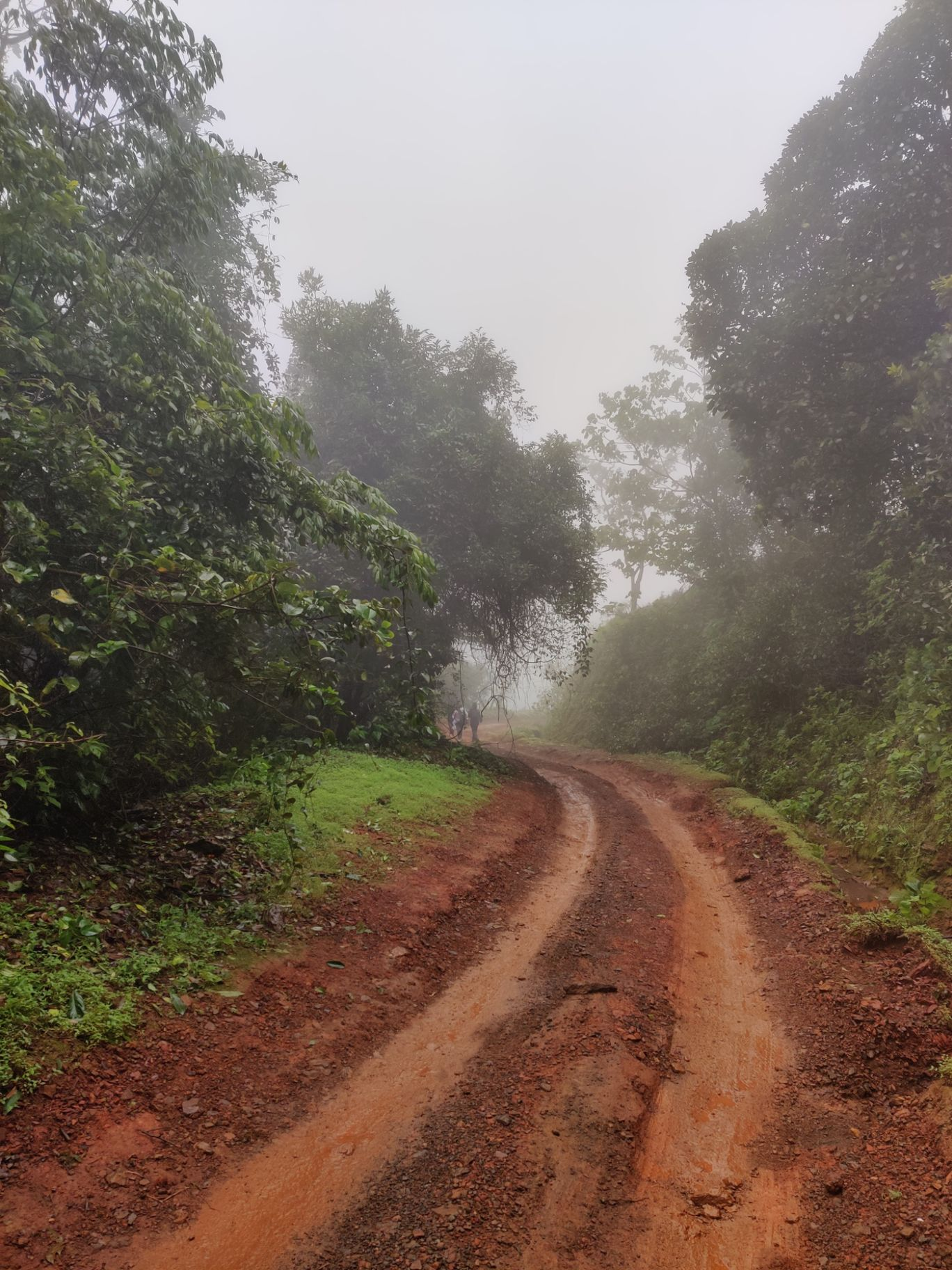 Photo of Kodachadri Trek Trail By Prateek Singhvi