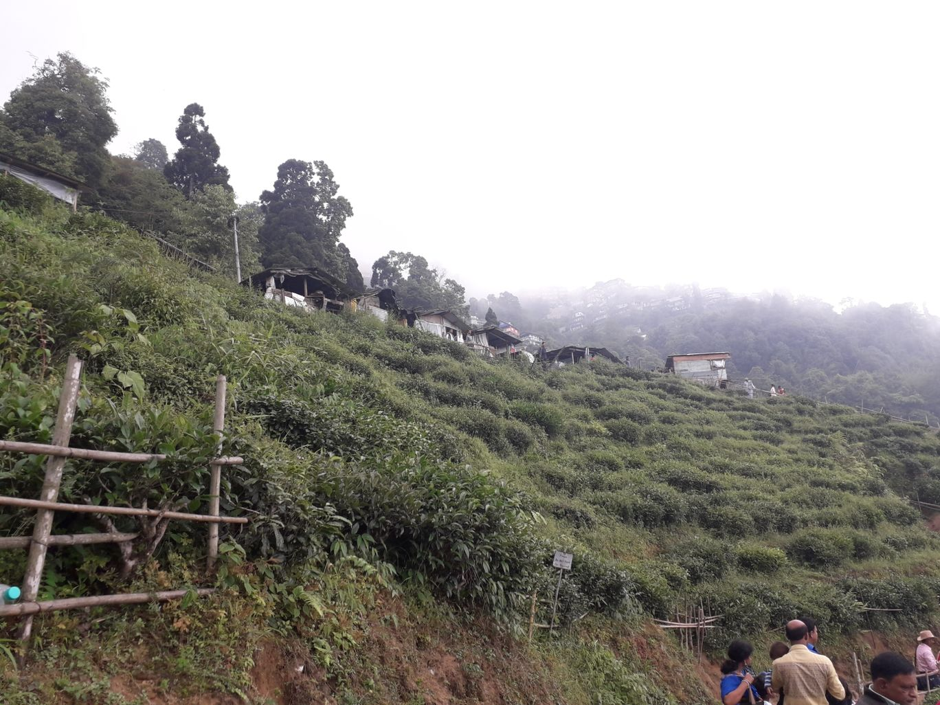 Photo of Darjeeling By Ashis Shaw
