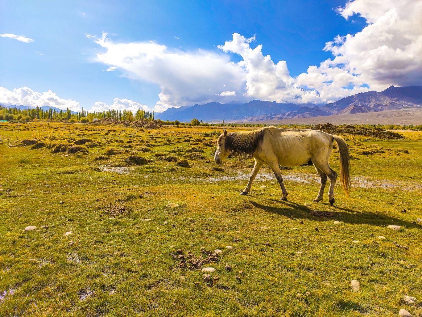 Photo of Ladakh By Sipu Kumar