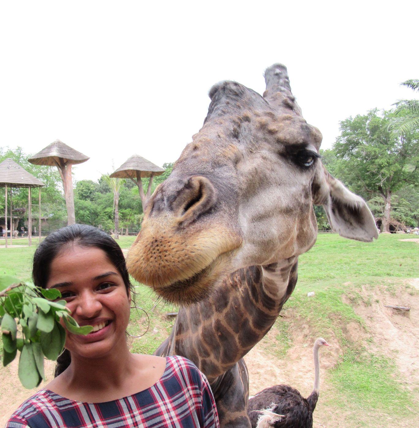 Photo of Khao Kheow Open Zoo By Treesa Anto