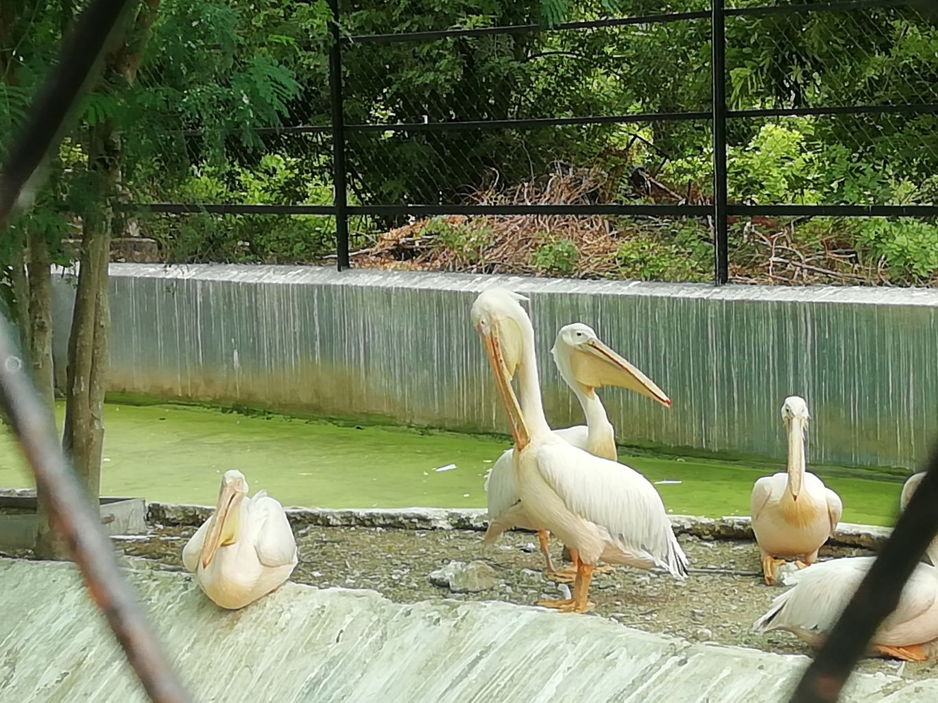 Photo of Arignar Anna Zoological Park By Jai balaji ram