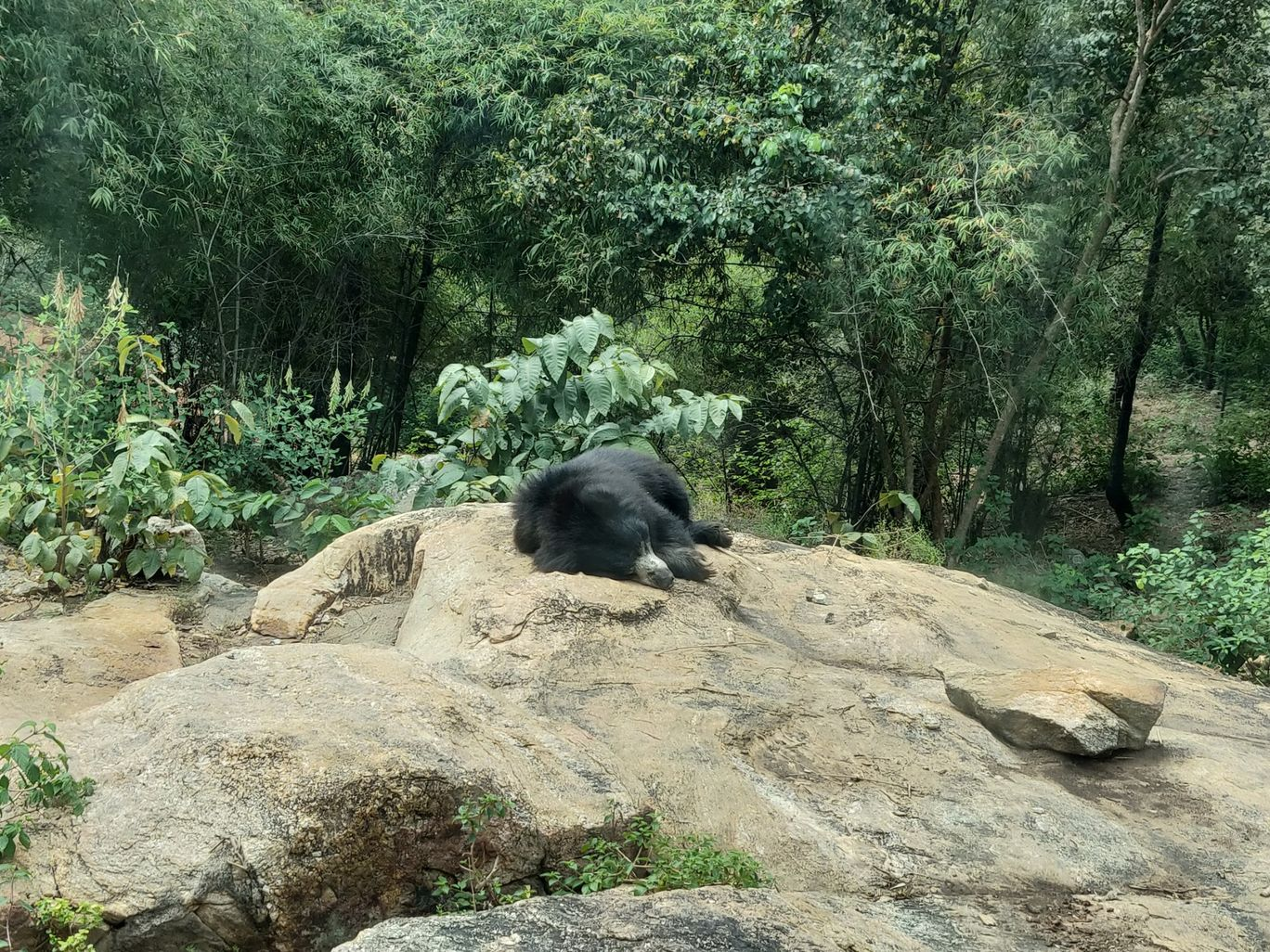 Photo of Bannerghatta National Park Kalkere office (Only office) By One For The Soul