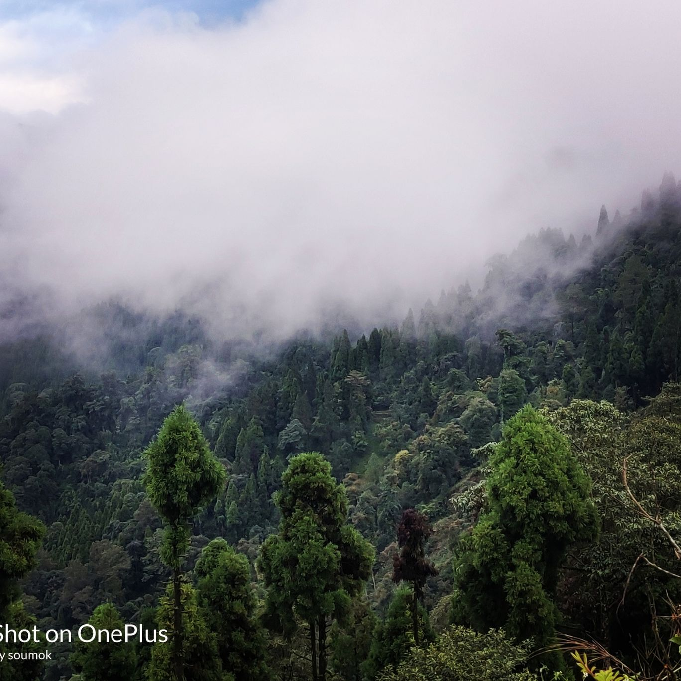 Photo of Neora Valley National Park By Soumok Chatterjee