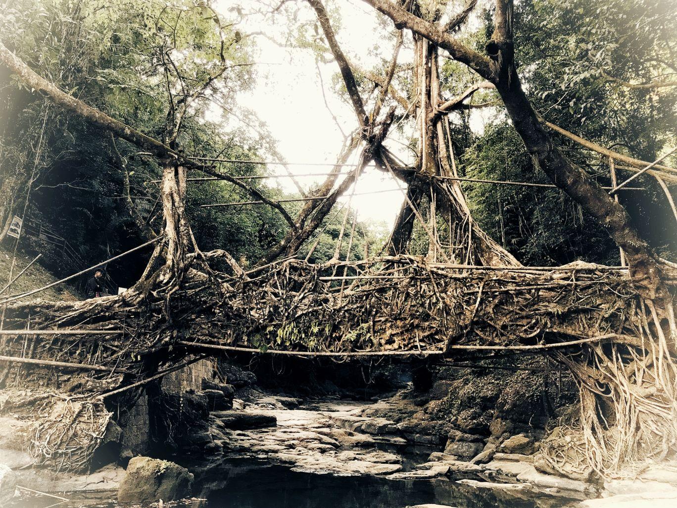 Photo of Living Root Bridge By Som Dutt