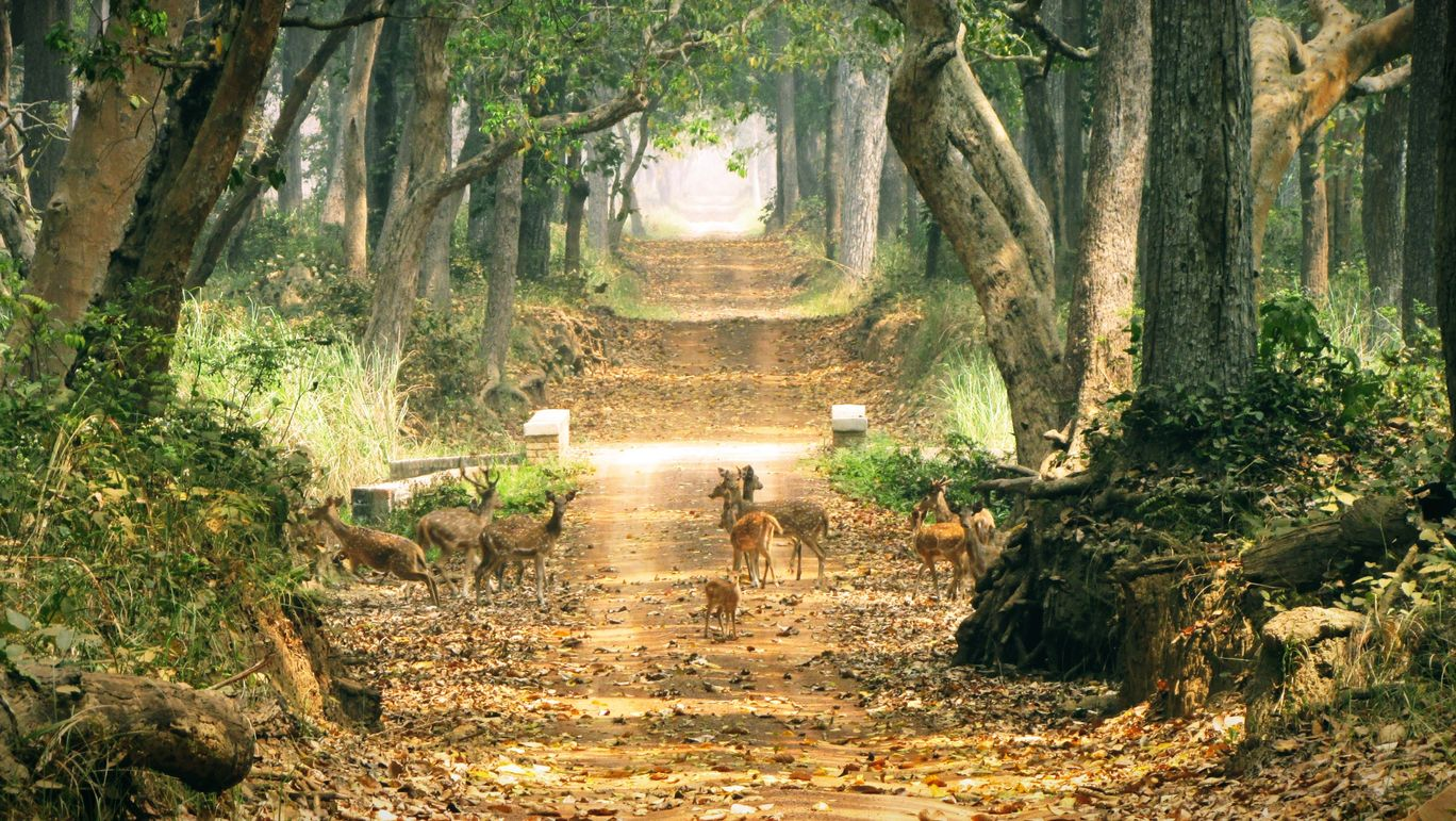 Photo of Dudhwa Tiger Reserve By Nishith Choudhary