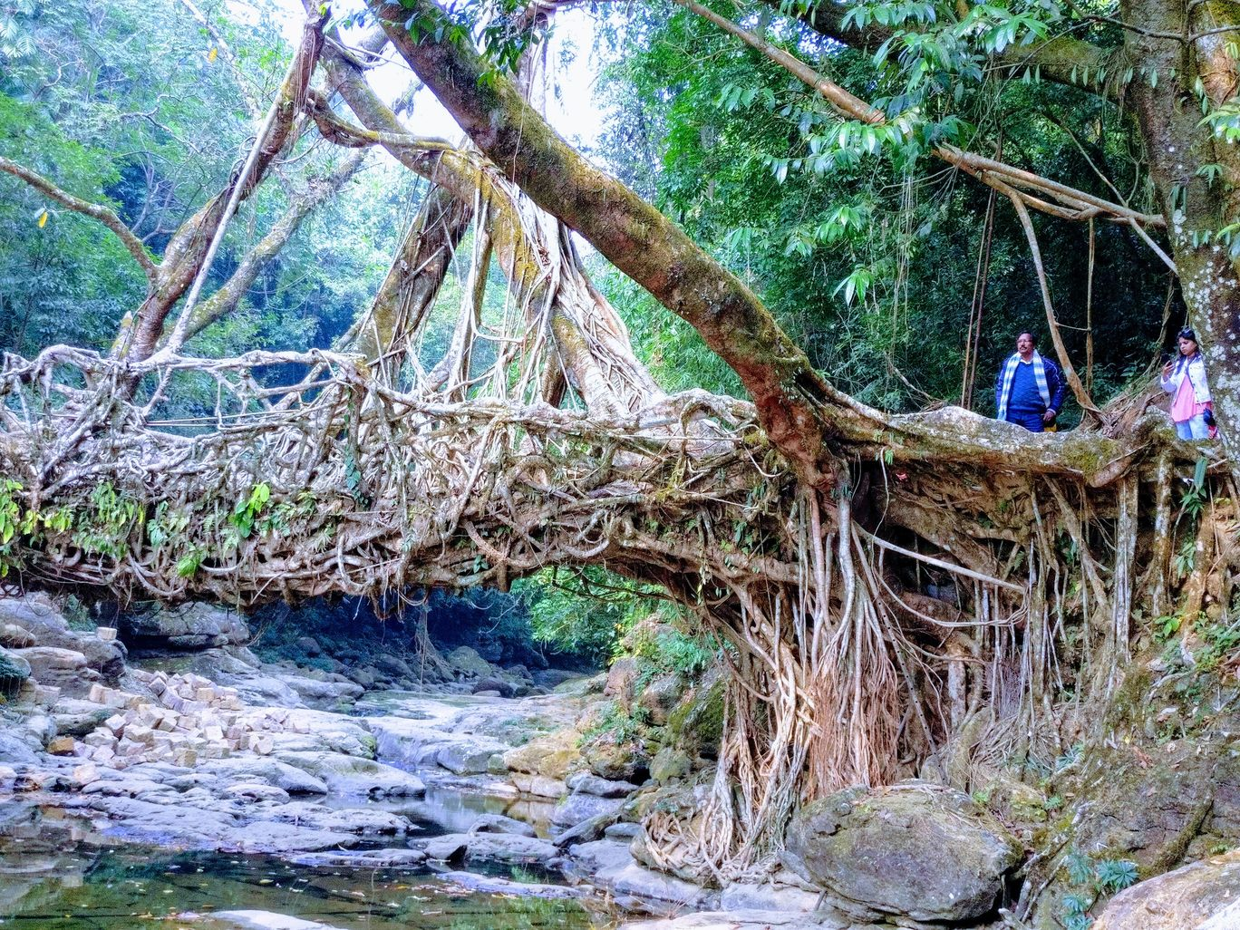 Photo of Living Root Bridge By ArchanaRT
