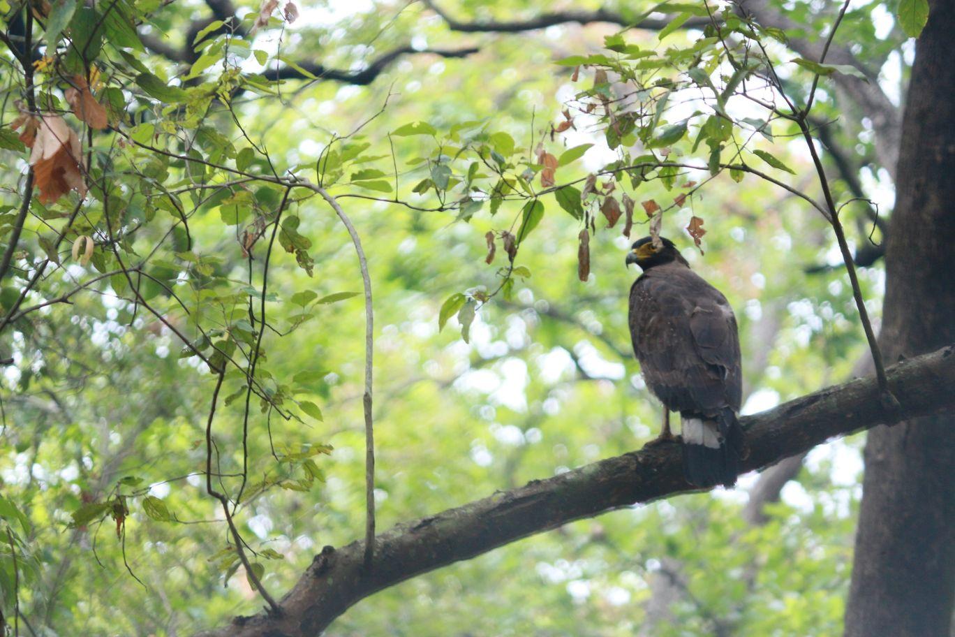Photo of Kalesar National Park By Aditya Gupta