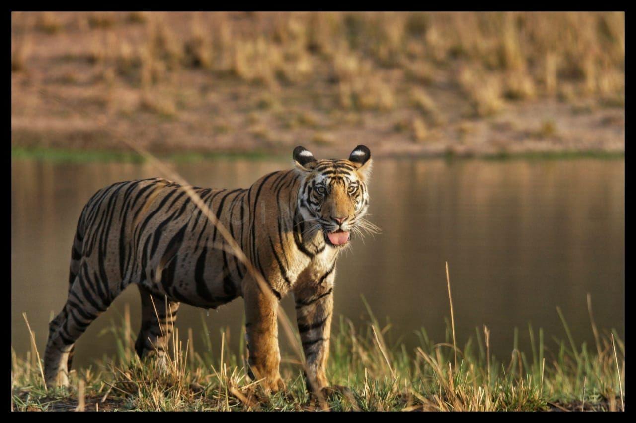 Photo of Bandhavgarh National Park By Abhijeet Singh Visen