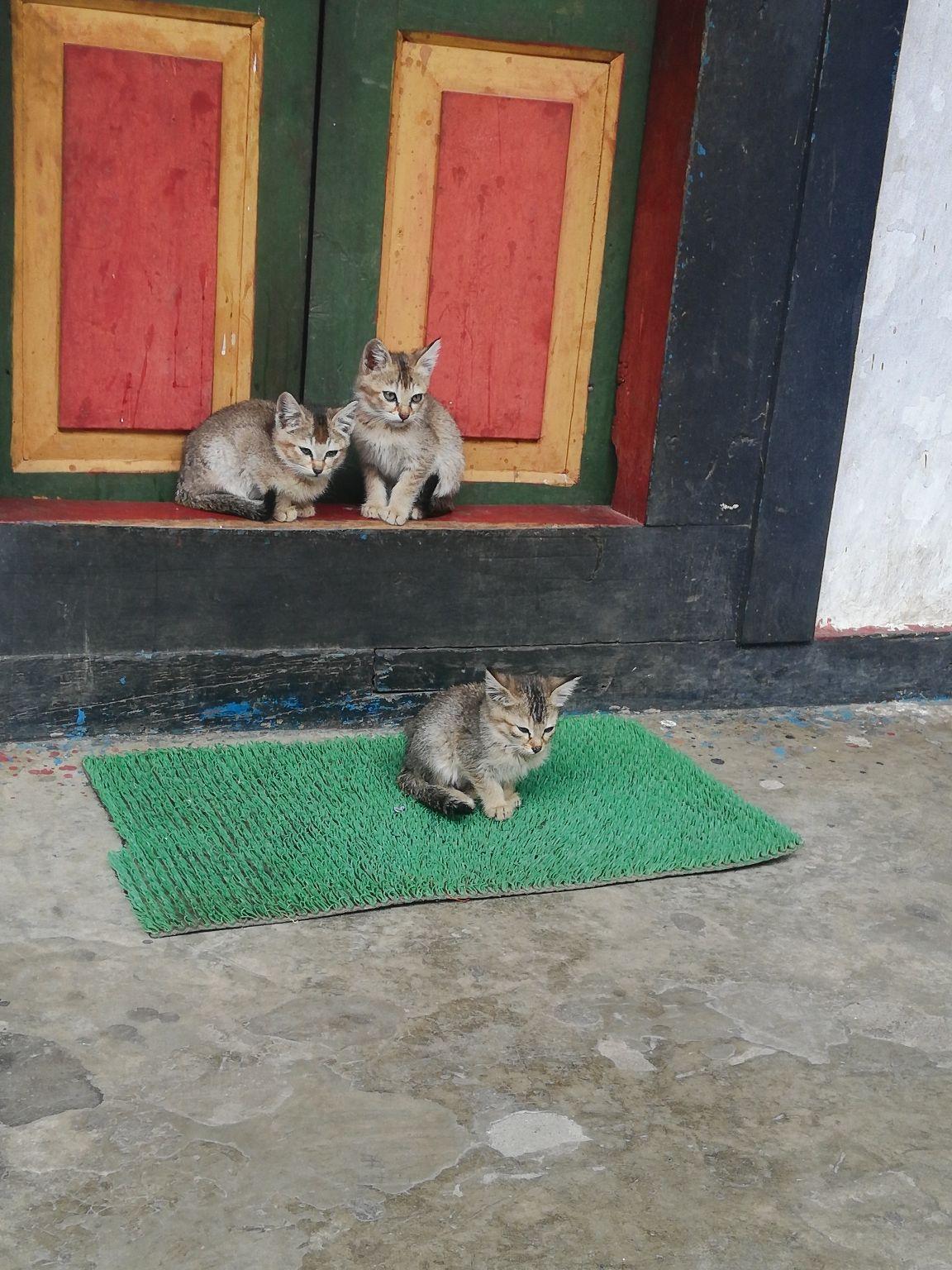 Photo of Bhutan By Dinesh Yadav