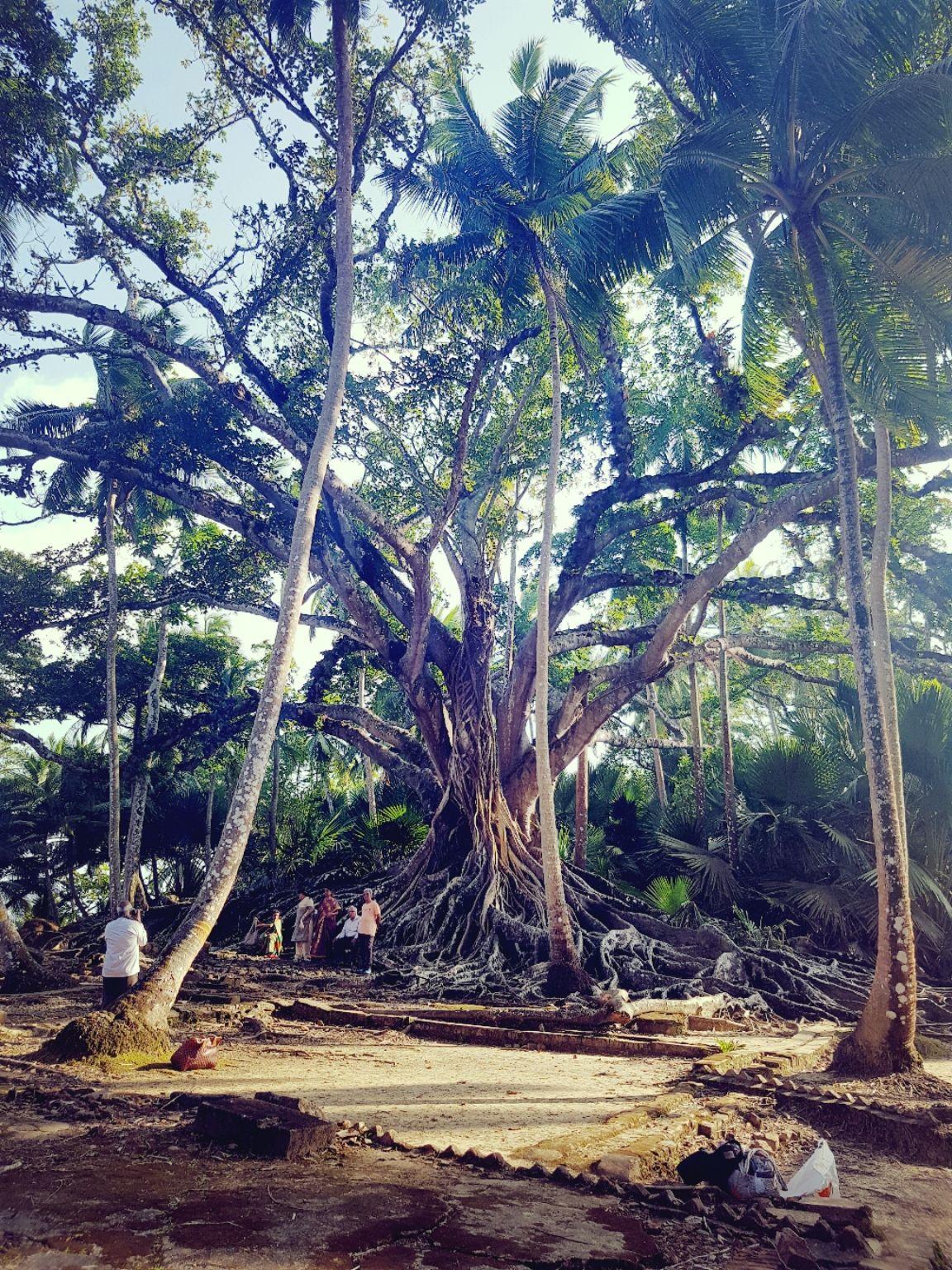 Photo of Ross Island By Aparupa Chakraborty